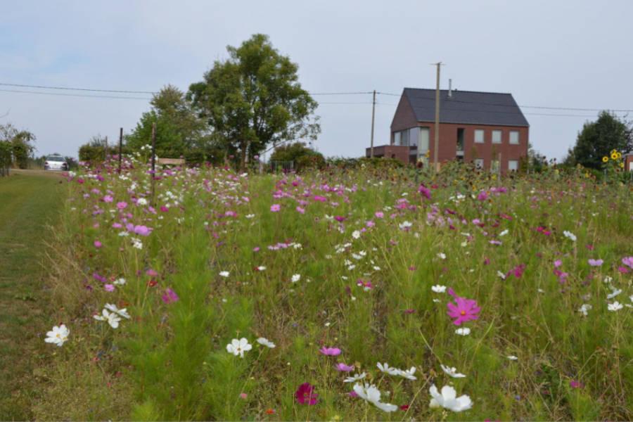 Wijngaard Den Eeckhout met bloemenweide