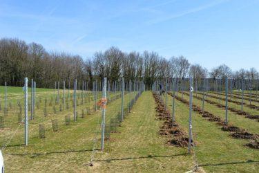 Den Eeckhout aanleg wijngaard 2015