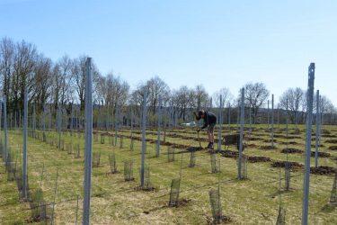 Den Eeckhout aanplant wijngaard 2015