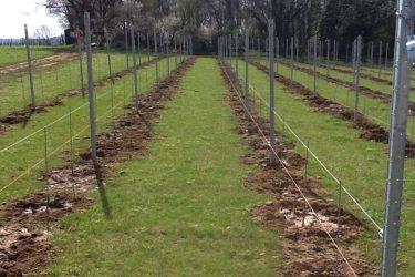 Den Eeckhout wijngaard gieten planten