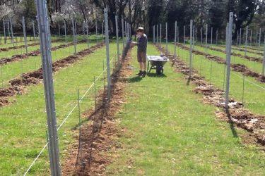 Den Eeckhout wijngaard netjes plaatsen