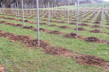 Den Eeckhout wijngaard planten 2016
