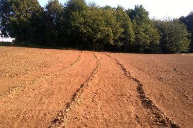 Den Eeckhout wijngaard stenen rapen oktober 2015