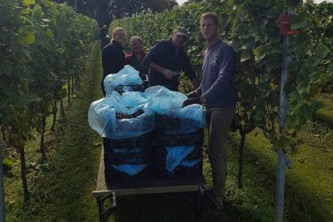 Oogst 2019 Pinot Gris