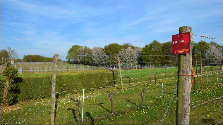 De wijngaard van Den Eeckhout op het hoogste punt van de Houwaartseberg